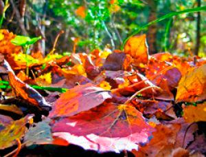 Нужно ли убирать осенью опавшие листья в парках под деревьями почему